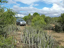 Thembalethu Safaris 4x4 Tracks